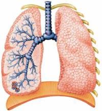 уколи від запалення легенів - фото