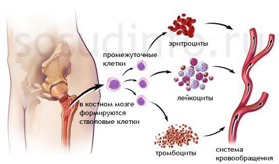 Фото - Лейкопенія: типи, ознаки, прояви, професійне і народне лікування, небезпека хвороби