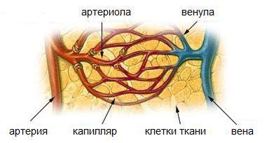 Фото - Мієлома: причини, ознаки, форми і стадії, виявлення, сучасна терапія