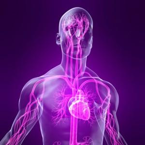 Фото - Серцеві прояви вегето-судинної дистонії та їх специфіка