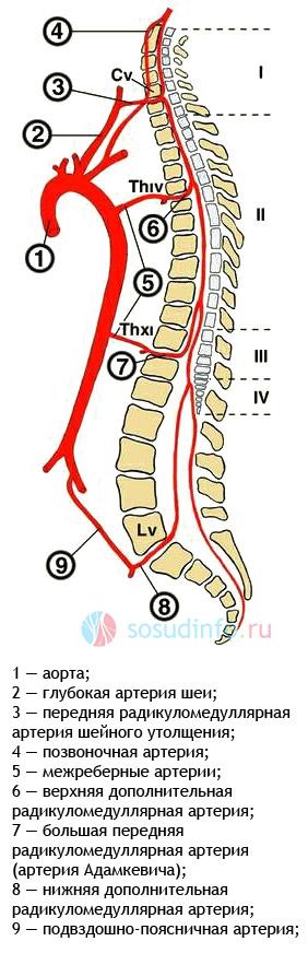 Фото - Спинномозкової інсульт: причини, ознаки, лікування, реабілітація, прогноз