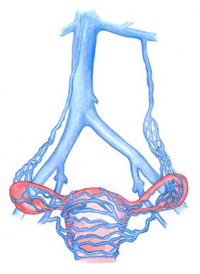 Фото - Жіночі види варикозного розширення вен: до, під час і після вагітності